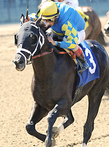 Shanghai Bobby wins the Aljamin Stakes in his return to racing.