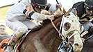 Kentucky Derby, Games, NY Racing Games, Road to the Roses, Official Fantasy Game of the NY Horse Racings road to the roses, Kentucky Derby 139, Kentucky Derby Road to the Roses online games, kentucky derby games and contest returns for 2013, Kentucky Derby, Road to the Roses, Churchill Downs, contest the road to the roses game is here NOW Horse-Racing-Now to the Road to the Roses, NY-Horse-Racings road to Kentucky Derby 139, May 4th, 2013, Will Take Charge