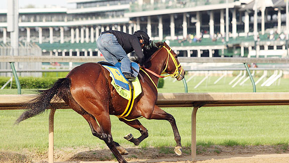 Wildcat Red works for the 2014 Kentucky Derby.