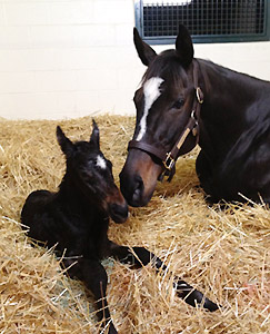 Zenyatta welcomes her first foal on the evening of March 8, 2012.