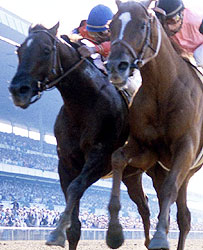 Affirmed (right) beats Alydar to the wire to win the 1978 Belmont Stakes and the Triple Crown.