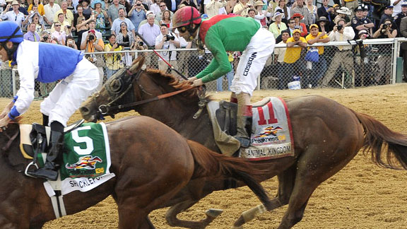 Animal Kingdom finishes second in the 2011 Preakness Stakes