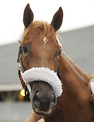 Early Belmont Stakes favorite Ice Box