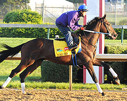 Nehro preps for the 2011 Kentucky Derby.