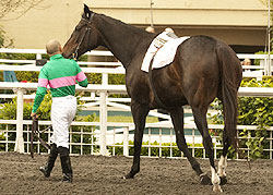 Zenyatta's farewell at Hollywood Park