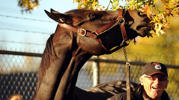 2010 Horse of the year Zenyatta with trainer John Shirreffs.
