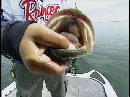 catches a huge one at lake guntersville december 28 2006 00 55