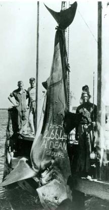 Imagen del Record Mundial IGFA más pesado de todos los tiempos Sutton-Fishing-Records-005