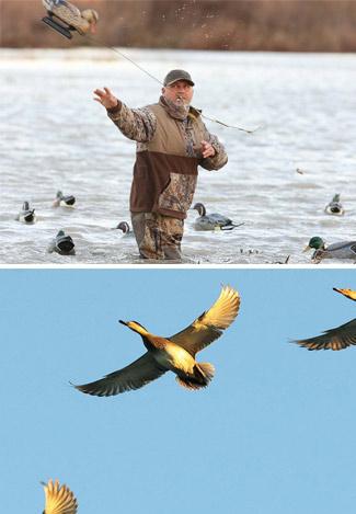 Live duck hunt