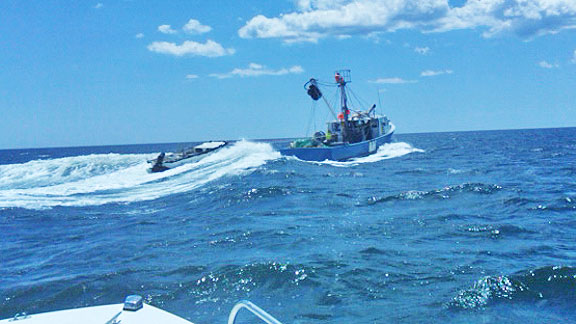 Bunker wars nj saltwater fisherman your 1 source for for Lbi fishing charters