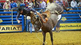2008 WNFR Results