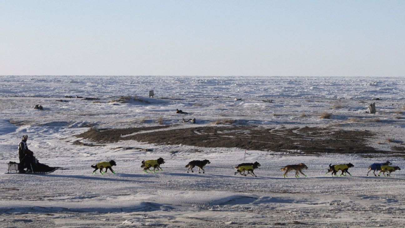 Peeved pets: Iditarod lead lost as dogs quit