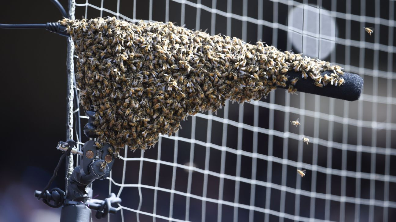 The game between the Marlins and Padres at Petco Park was delayed for 28 minutes after a swarm of bees settled onto a microphone attached to the netting near San Diego's dugout.