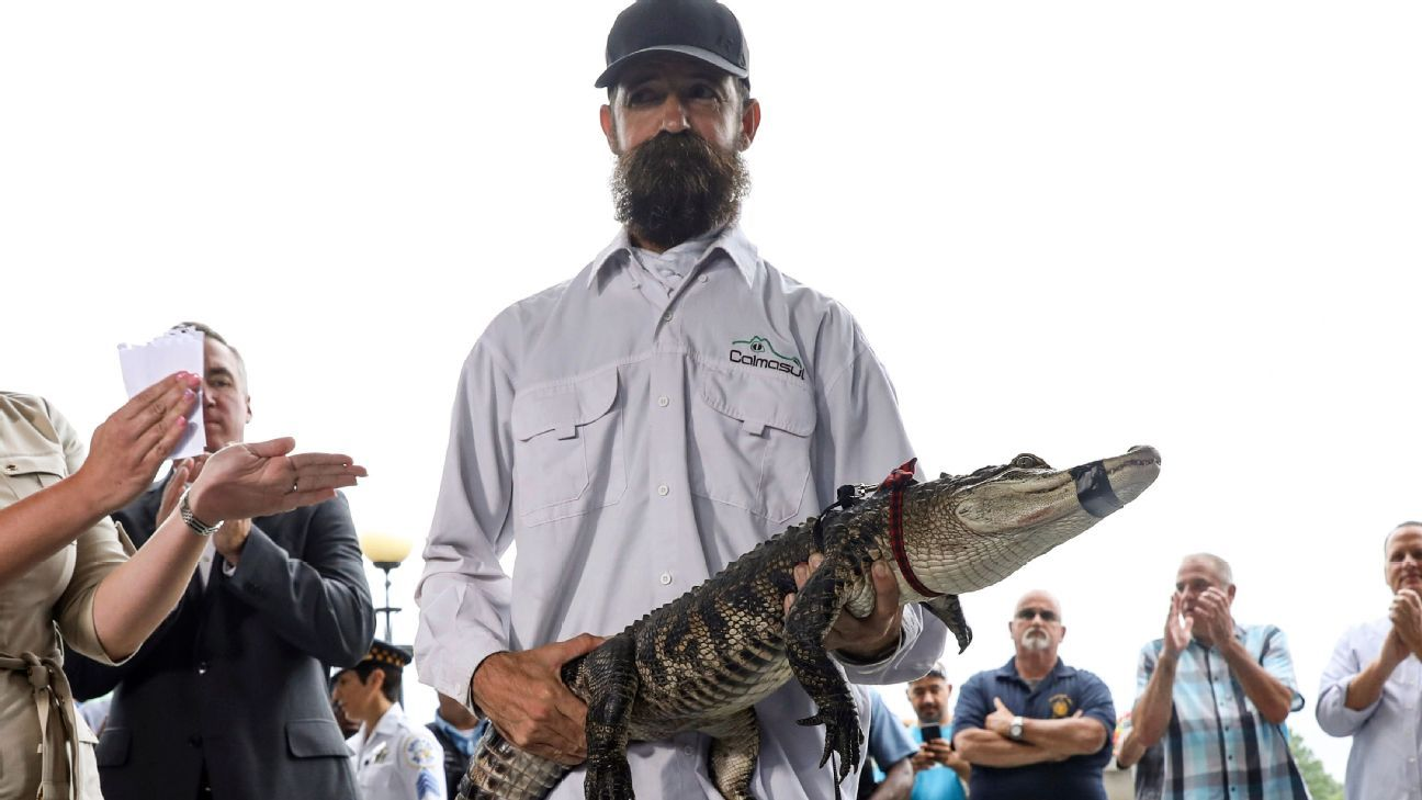 Chicago's alligator catcher throws out 1st pitch