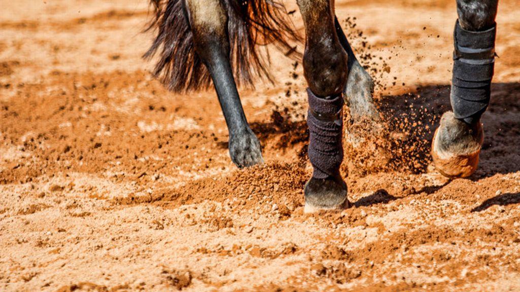 Seeding set for SEC Equestrian Championship