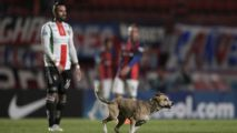 Speedy dog interrupts San Lorenzo game in Argentina