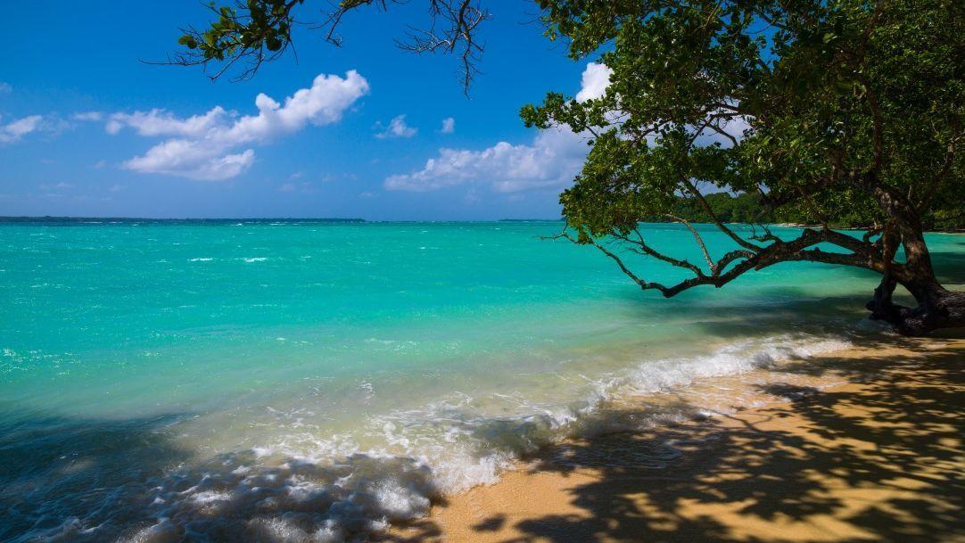 Vanuatu, na Oceania, procura técnico para sua seleção na internet; veja requisitos