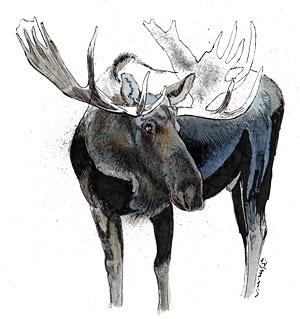 Ilustración de alces