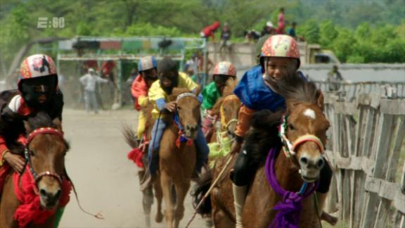 The child jockeys of Sumbawa