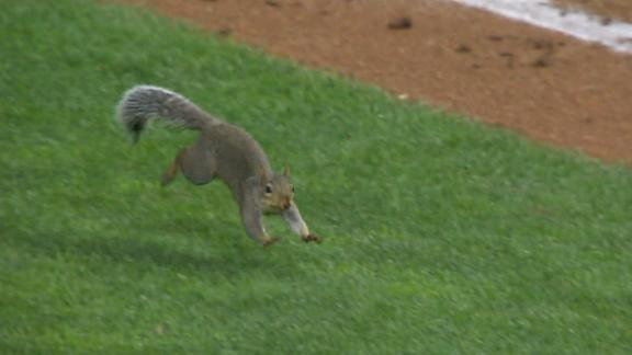 Squirrel invades the field during White Sox-Twins game