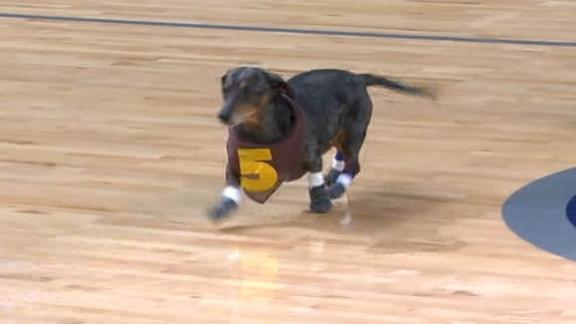 Grizzlies have a dog race during halftime
