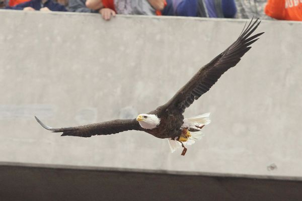 Auburn retires 20-year-old golden eagle mascot