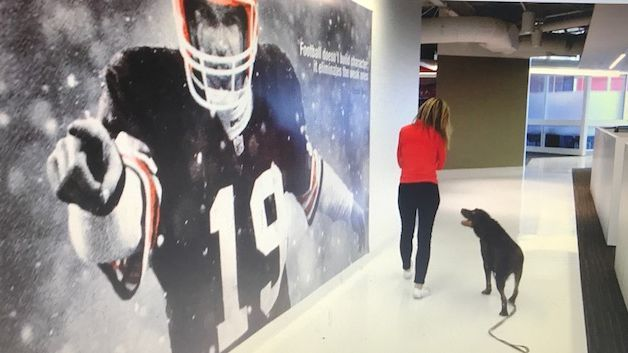 Cleveland Browns Dog / After 5 Seasons Swagger Will Make ...