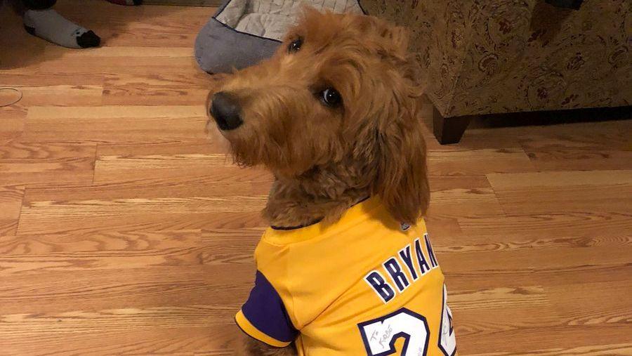 Arike Ogunbowale's dog rocks a Kobe Bryant jersey (and Mamba approves)