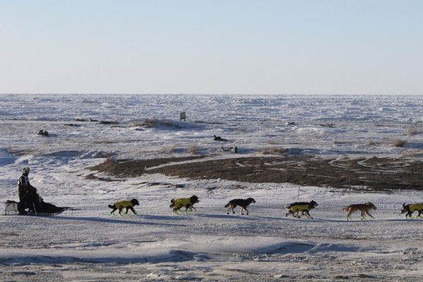 Iditarod winner from Norway stranded in Alaska