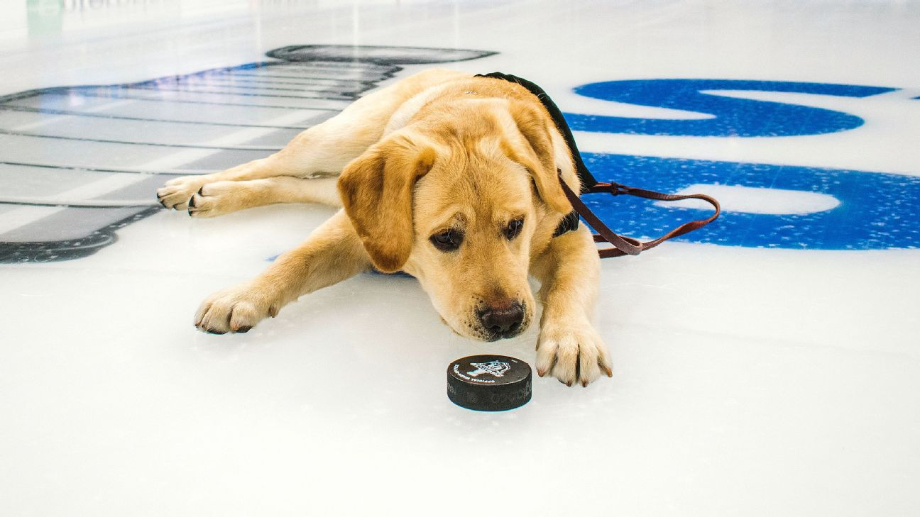 separation shoes 845ca 2a785 Meet Barclay, the St. Louis Blues' dog training for a ...